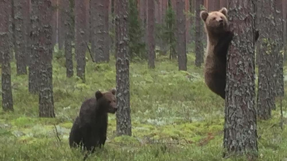 Valkas pagasta mežos manīti lācēni