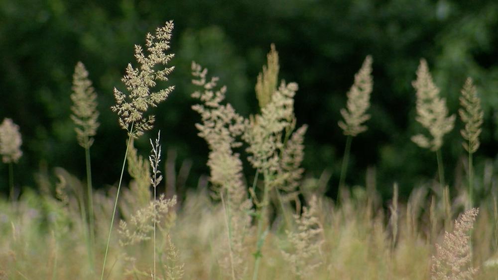 Iesēj savu kvadrātmetru dabiskās pļavas