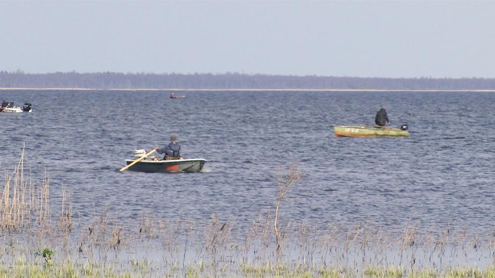Cīņa par zivīm Burtnieku ezerā
