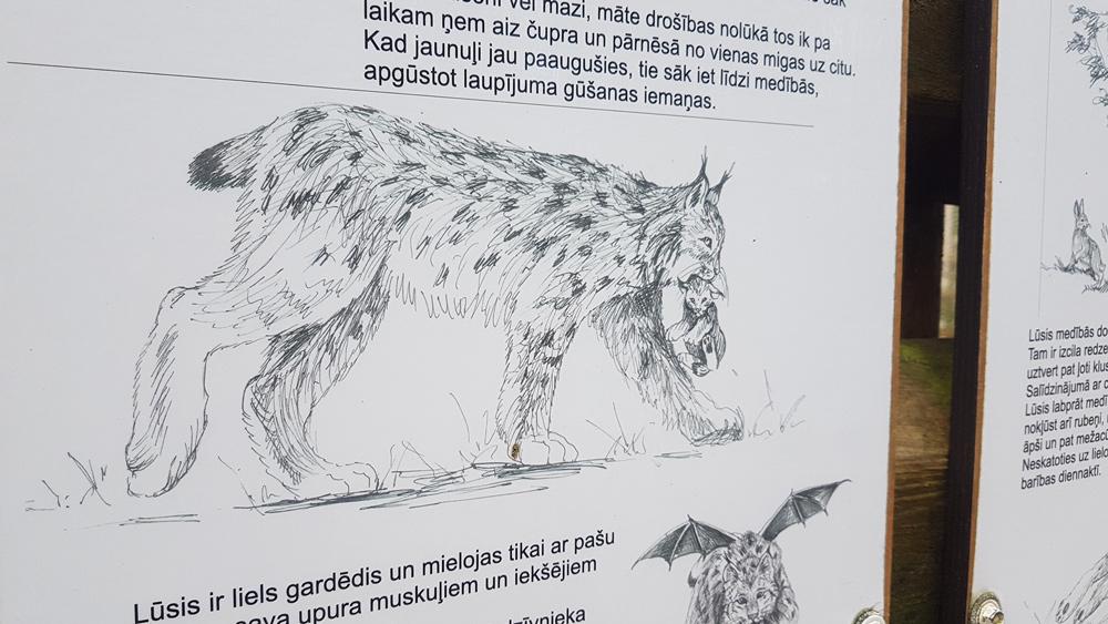 Nav vienprātības par lūšu medību aizliegšanu Latvijā