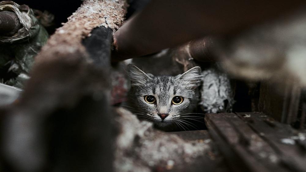 Kuldīgā novieto pirmo māju kaķiem
