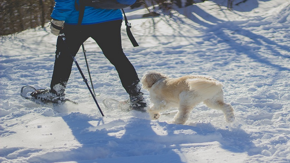 Aukstajā laikā veterinārārstiem vairāk darba