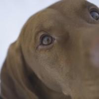 Latvijā trūkst suņu pastaigu laukumu