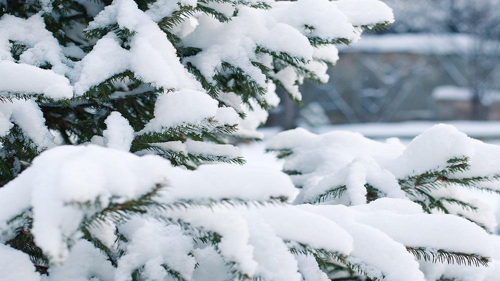 Gulbenes novadā karavīri aizvadījuši ziemas izdzīvošanas kursu