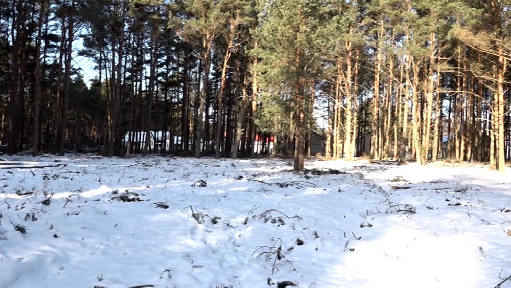 Lietuvas pilsonis ar pārkāpumiem izcirtis daļu sev piederoša meža Papes dabas parkā