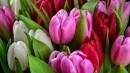 Kuldīgā ar brīvdabas izstādi atzīmē 8. martu