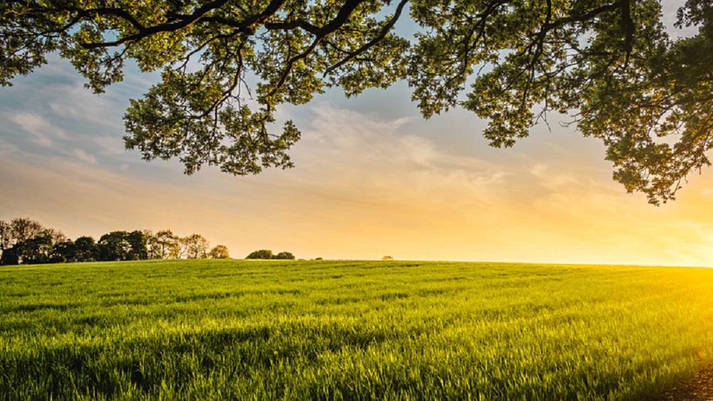 Valmierā sāk veidot dabisko pļavu