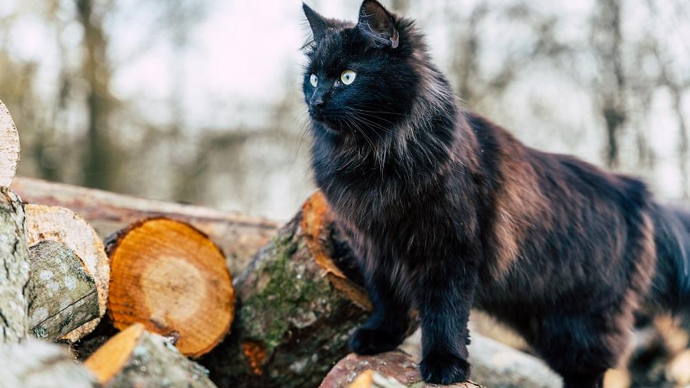 Pētniecībai iedvesmo kaķis