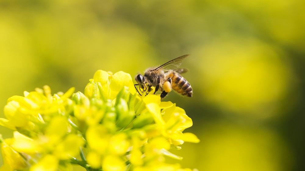 Noteikti bišu stropu pārvietošanas ierobežojumi