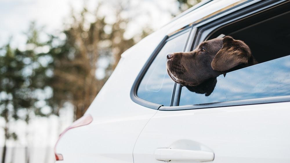 Karstais laiks īpaši bīstams zīdaiņiem un dzīvniekiem automašīnās