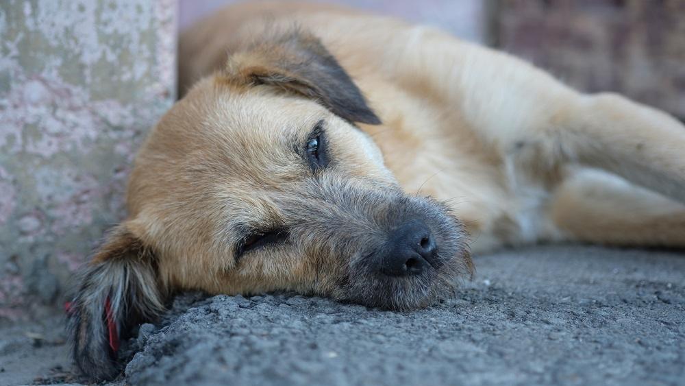 Dzīvnieku aizstāvji: cietsirdību pret dzīvniekiem nevar kvalificēt kā administratīvu pārkāpumu