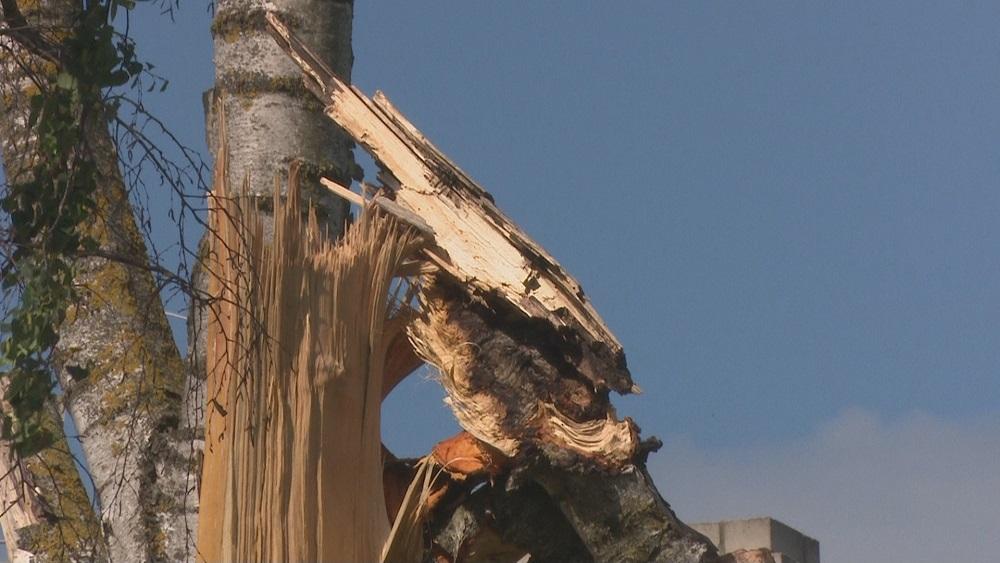 Kā rīkoties, ja uz ceļa uzkritis koks?
