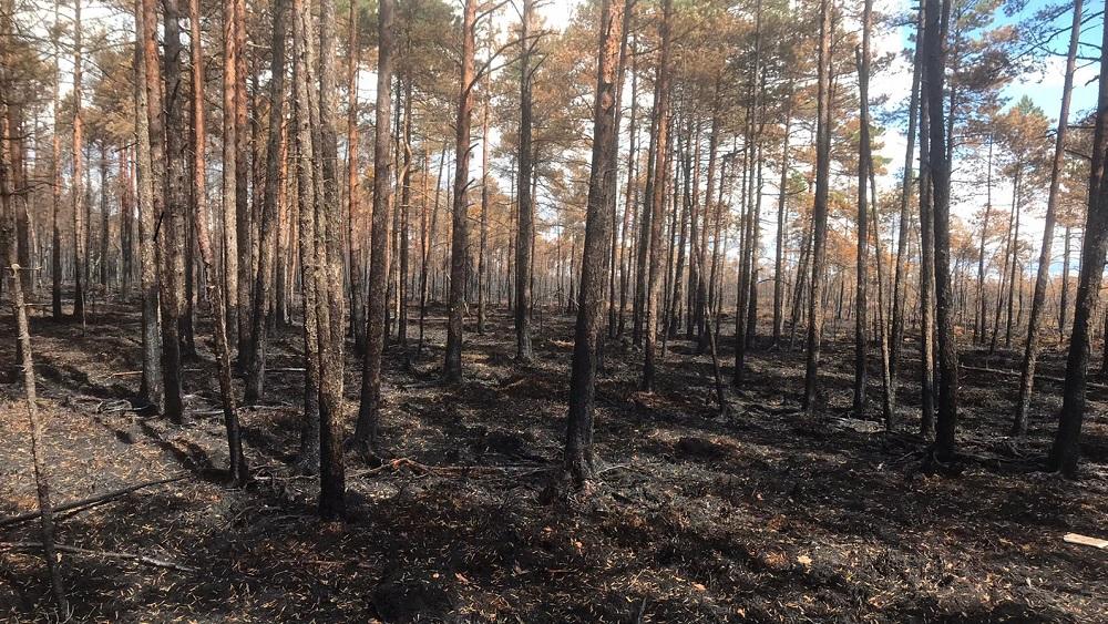Pemmes purva ugunsgrēks nodzēsts; palīdzēja lietusgāzes