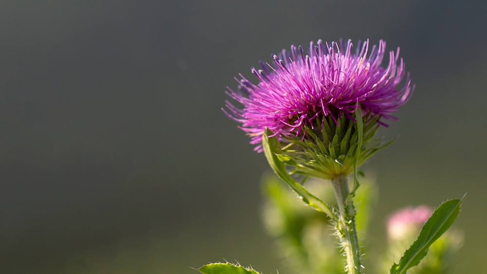 Bioloģiski saimniekojot, var iegūt labu ražu