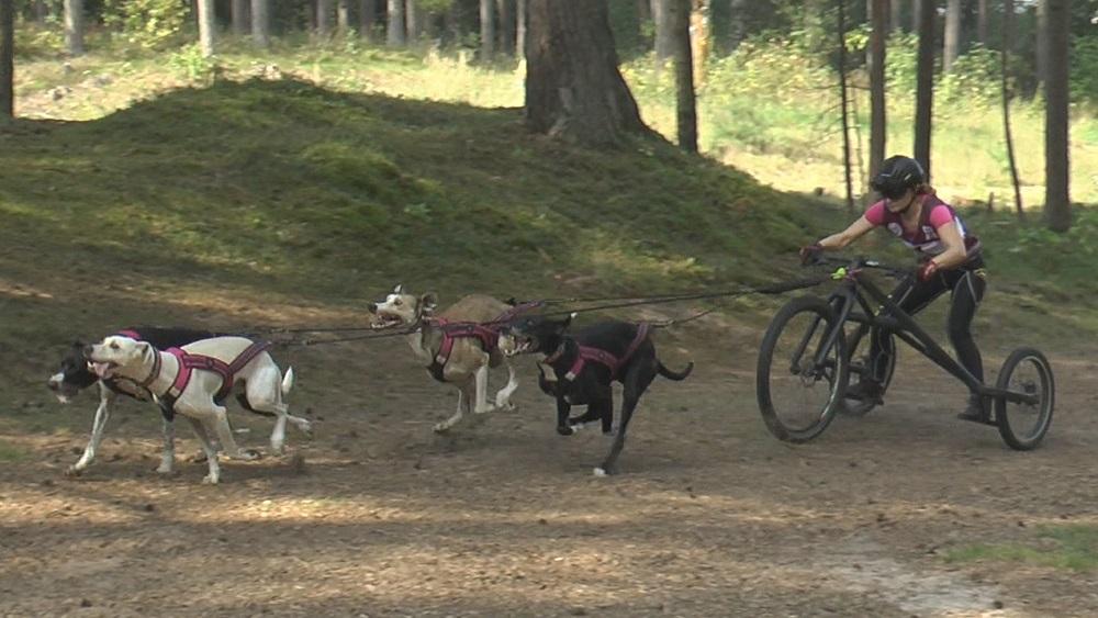 Pasaules kauss kamanu suņu sportā; Latvijā notiks trīs no pieciem posmiem
