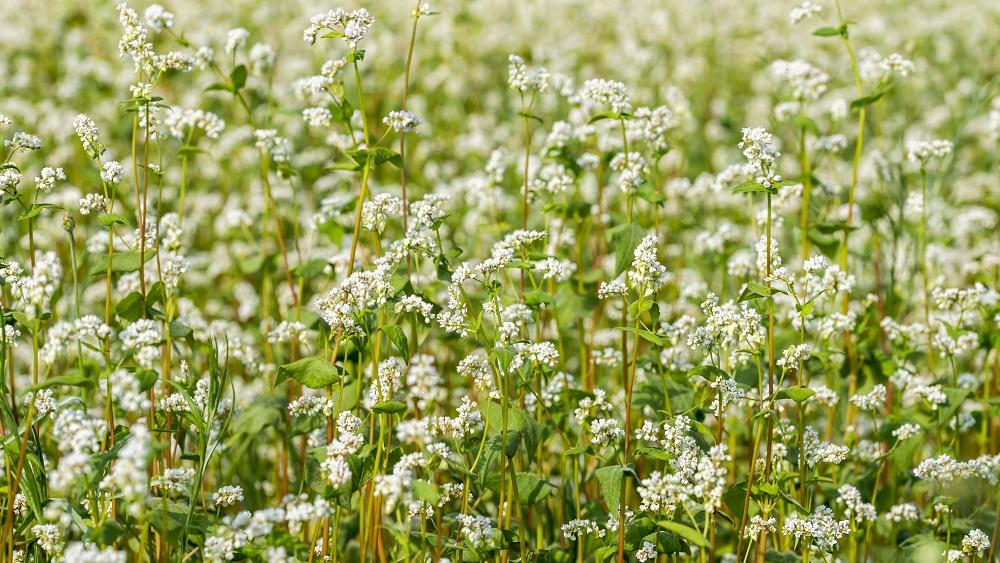 Latvijā ir vairāk nekā 4000 bioloģisko zemnieku saimniecību
