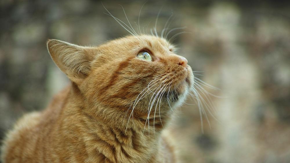 """Biedrība """"Par ķepām"""" glābj ielas kaķus"""