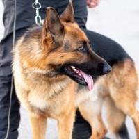 Rēzeknē VID Muitas pārvaldei top moderna suņu apmācības bāze