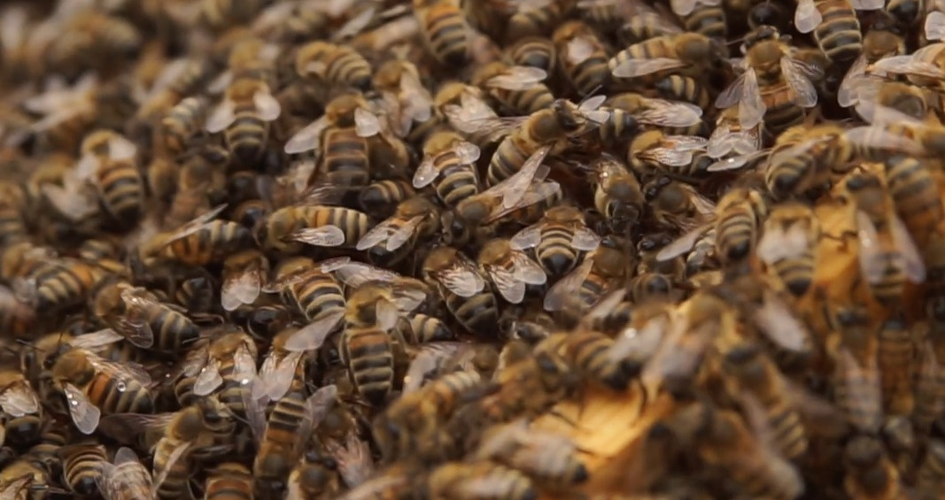 Čornajas bites